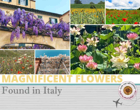 Things to do in Italy - magnificent flowers - ouritalianjourney.com