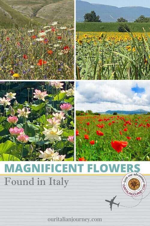 Must see - magnificent flowers of Italy - ouritalianjourney.com